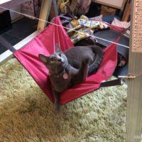 猫ハンモック