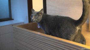 キャットハウス完成に喜ぶ猫