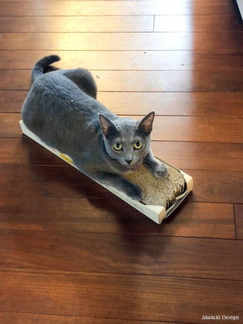 猫ハウス着工直前