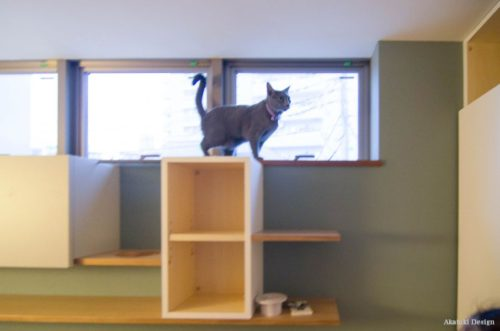 壁面収納と猫