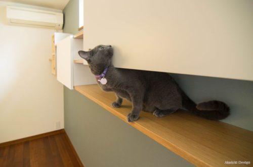 猫と棚収納