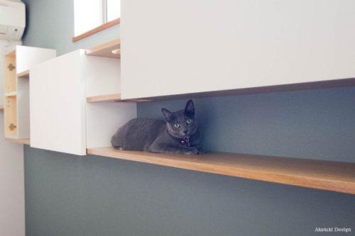 猫のお気に入りスポット