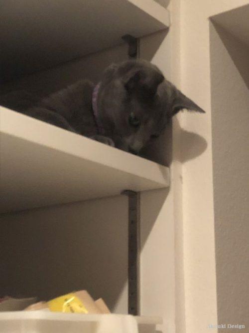 パントリー猫