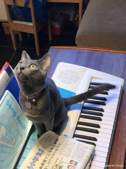 猫ディスコ