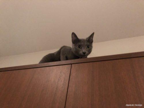猫好きスポット