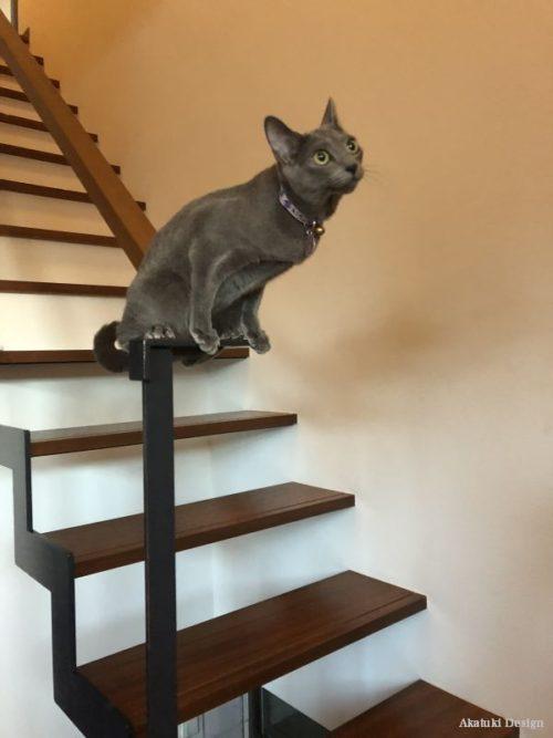 足場ぼ悪い猫