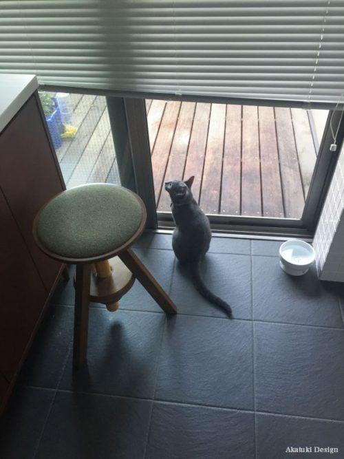 テラスから外を眺める猫