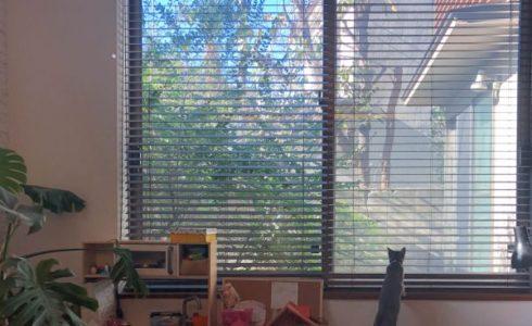 庭を眺めている猫