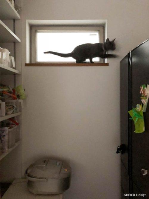 窓台に乗る猫