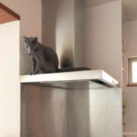 レンジフード猫