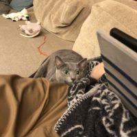 家族に寄り添う猫
