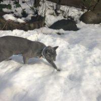 猫の雪遊び
