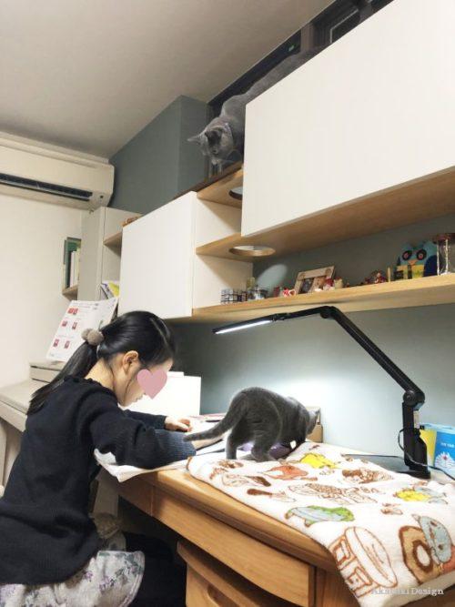 キャットハウス二匹の猫