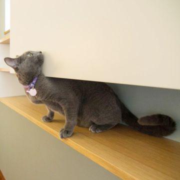 猫ハウスピックアップ