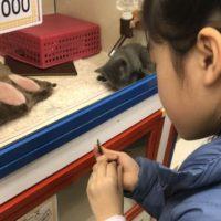 猫自分で買う